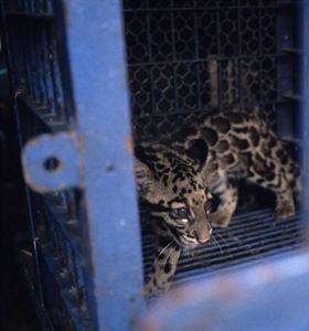 Report on 'jaw dropping' levels of wildlife trafficking in SE Asia...